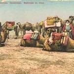 Types of Turkestan Samark and Camels of the Steppe.
